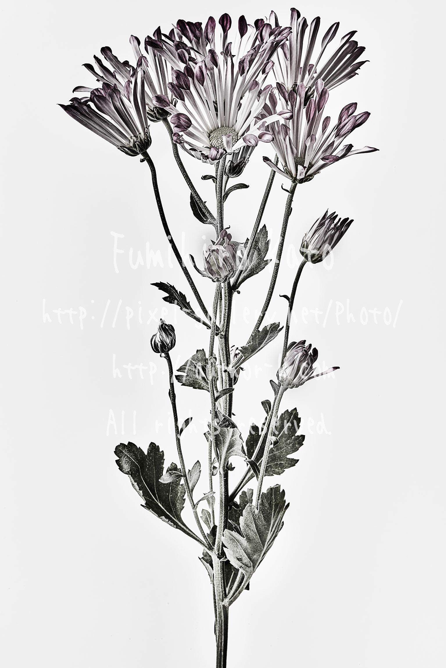 REMIX : 花、彫刻と化す #2015_18517