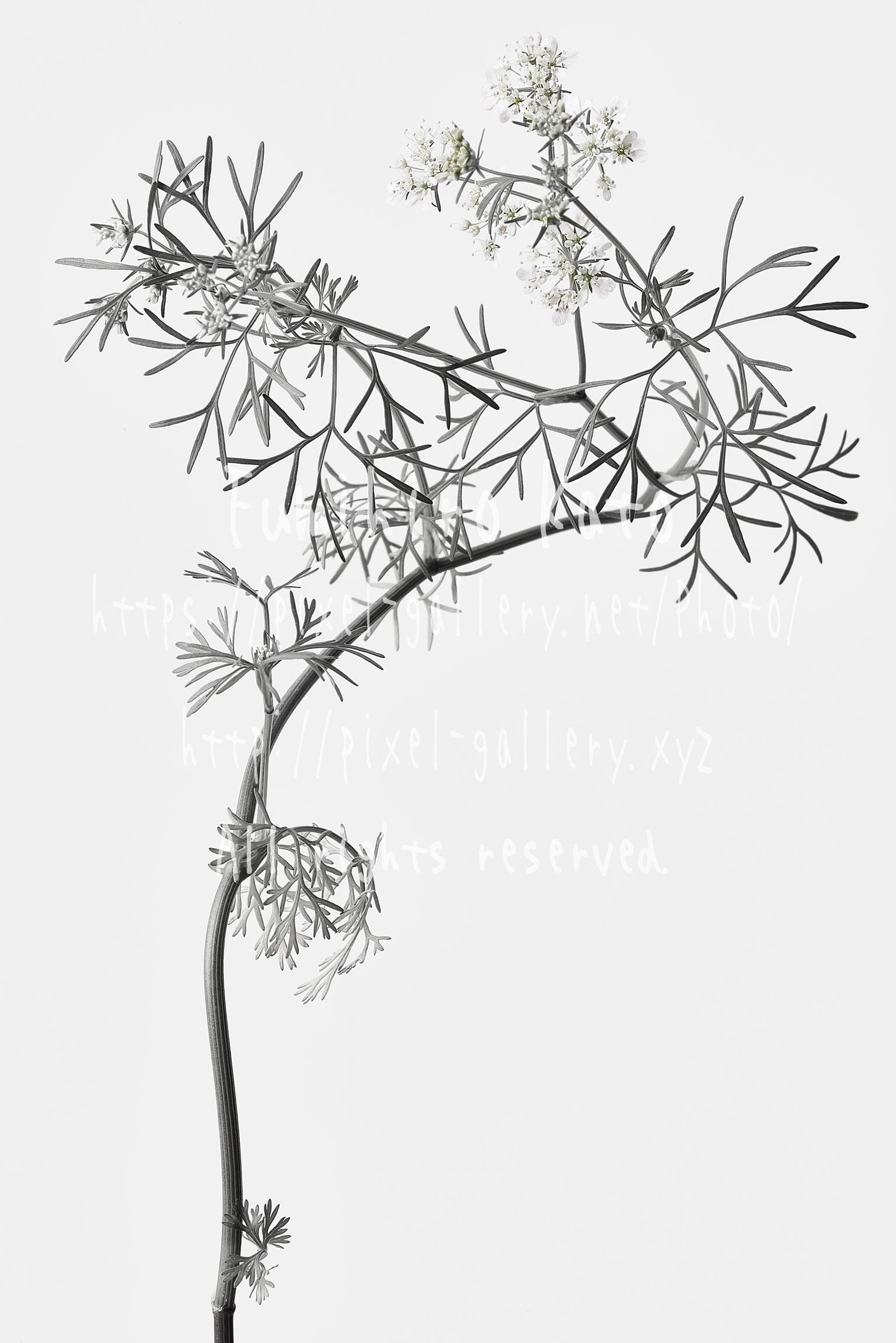 花、彫刻と化す #2016_20965