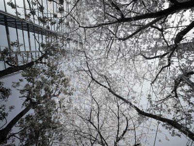 武蔵小杉あるいはMusako 2016_20983