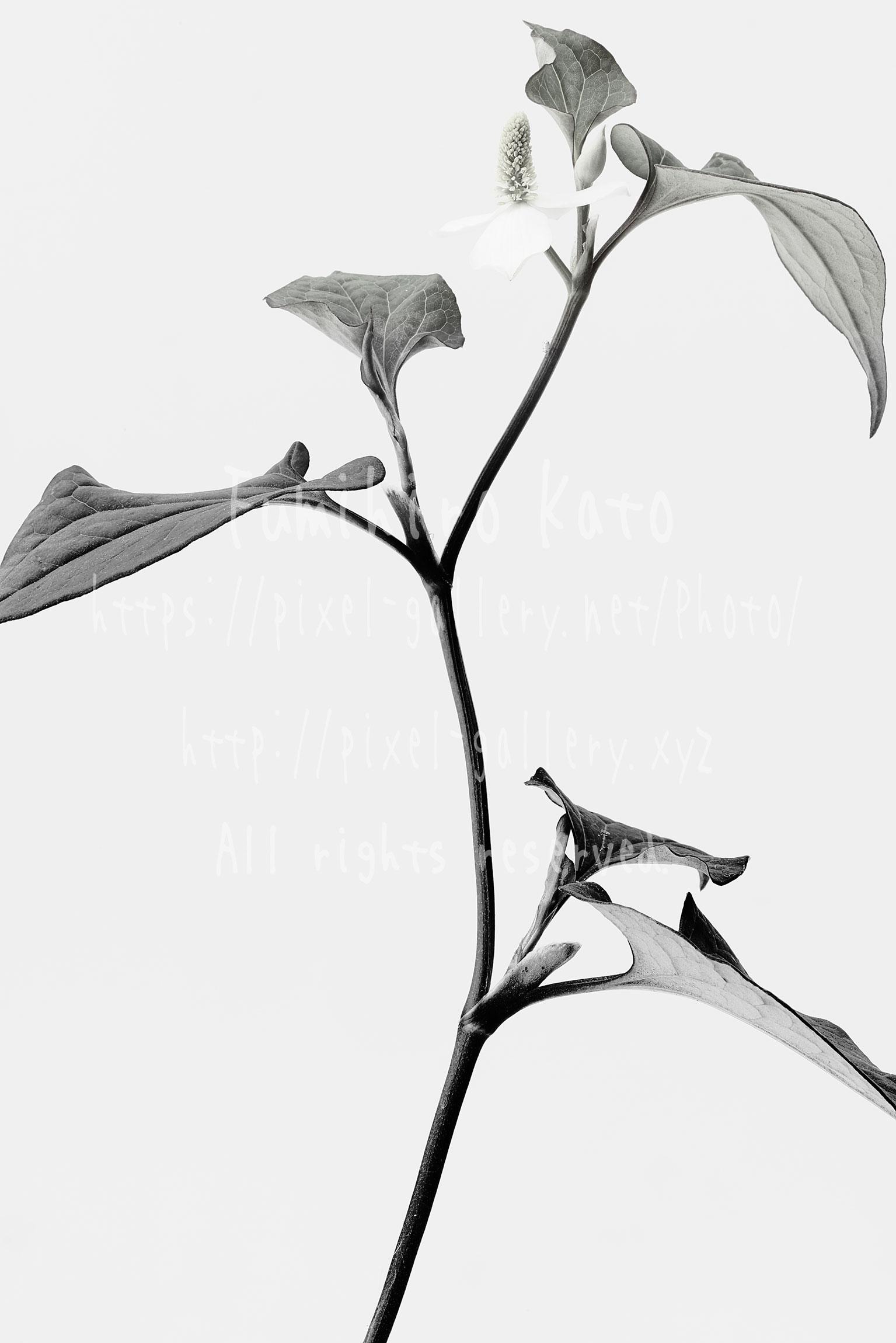花、彫刻と化す #2016_21200