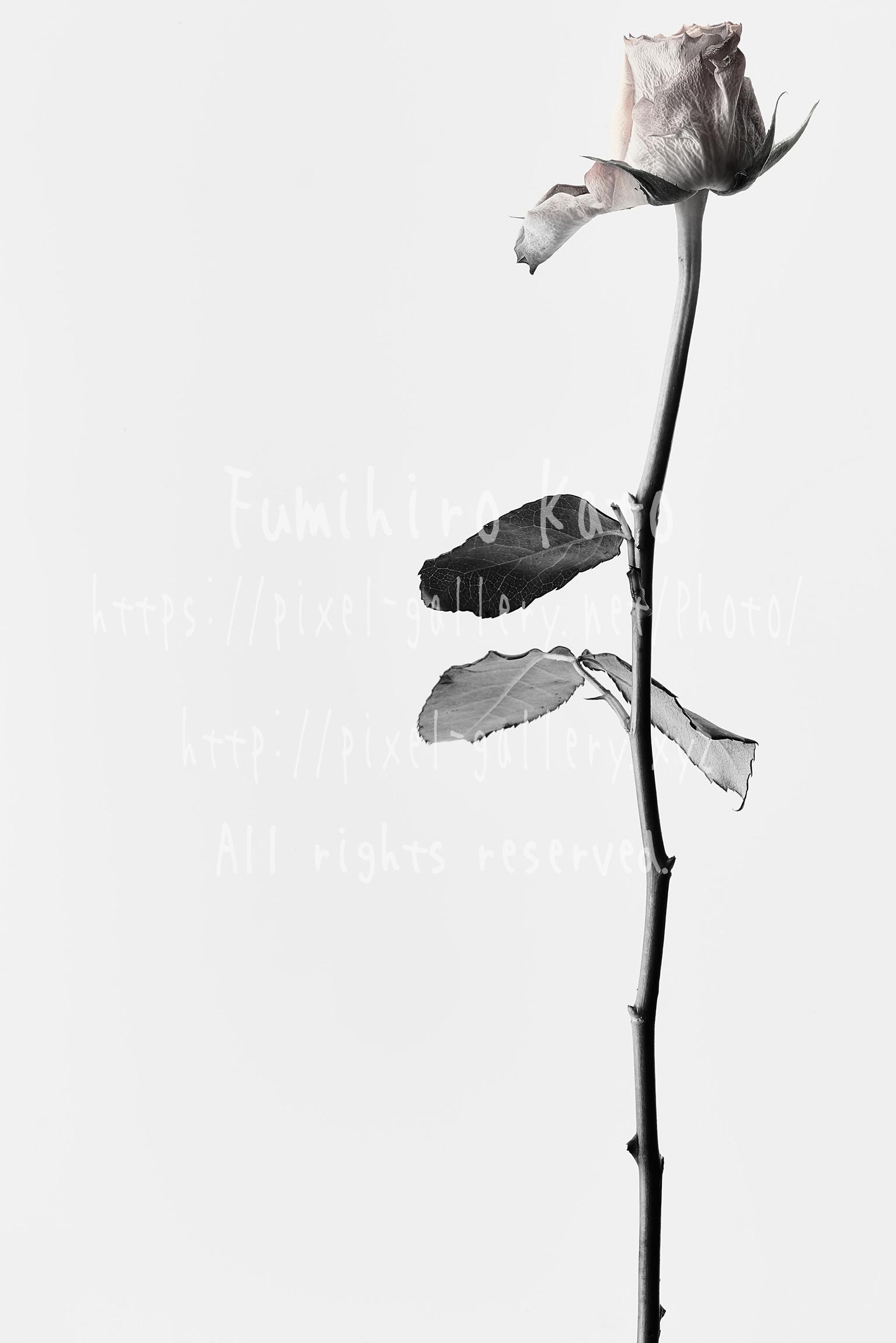 花、彫刻と化す #2016_21323