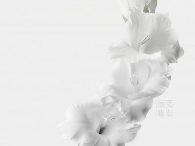 花、彫刻と化す #2016_21481