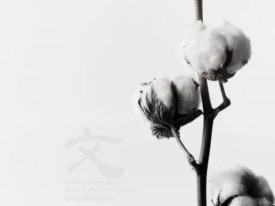 花、彫刻と化す #2016_21736