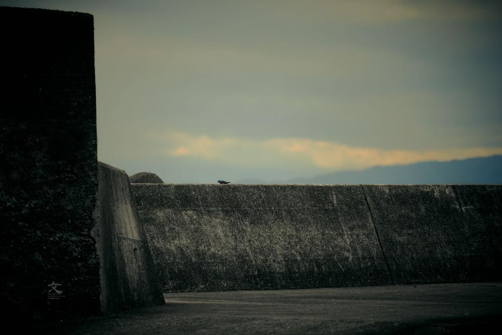 岸壁に鳥 福浦 湯ヶ島