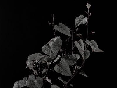 Replant 2017 5535
