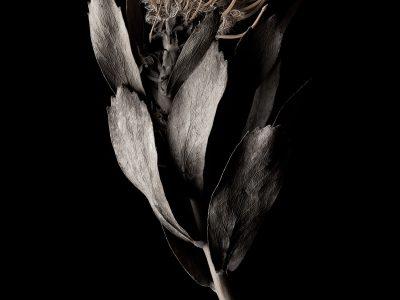 赤銅の花 1