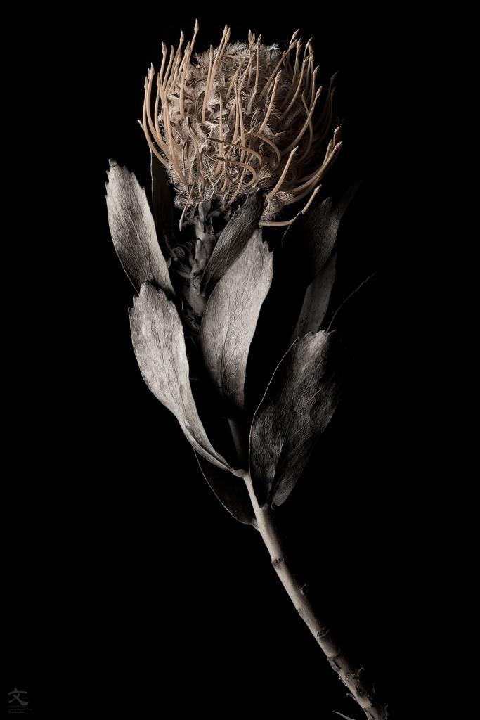 赤銅の花 オリジナルプリント 加藤文宏