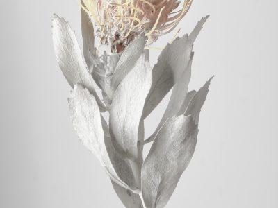 化石の花 1