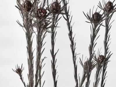 赤銅の花 2