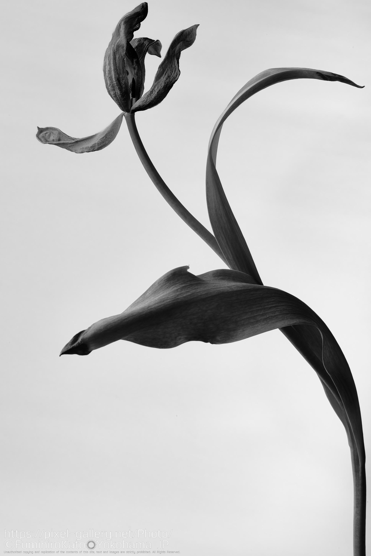 鋼の花 1