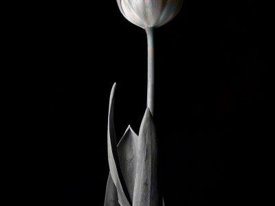 酸化膜の花 1