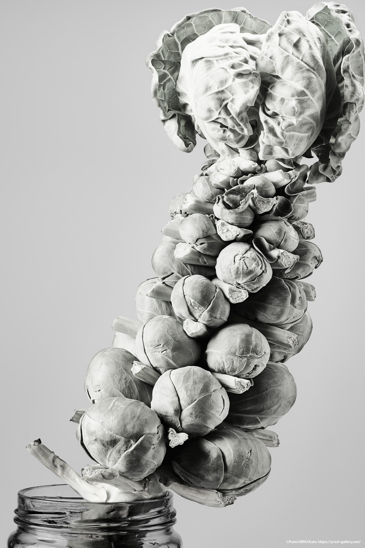 化石の花 3
