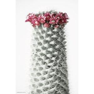 ハナ 2020-021 Cactus #2