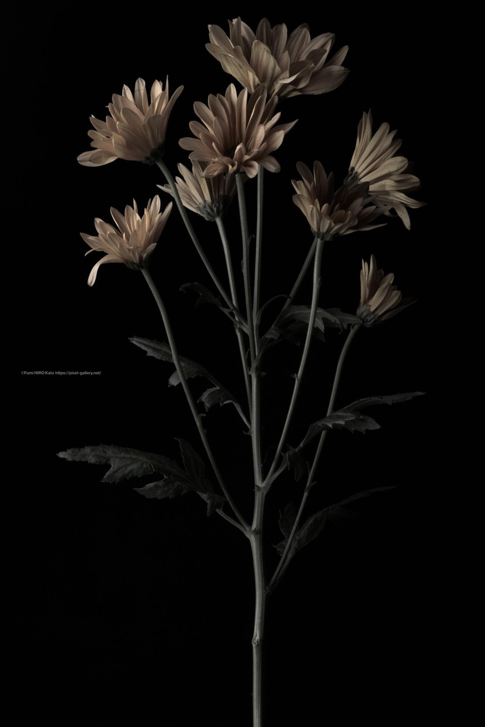 ハナ 2020-036 真鍮の花