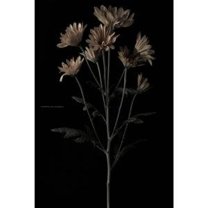 サムネイル ハナ 2020-036 真鍮の花