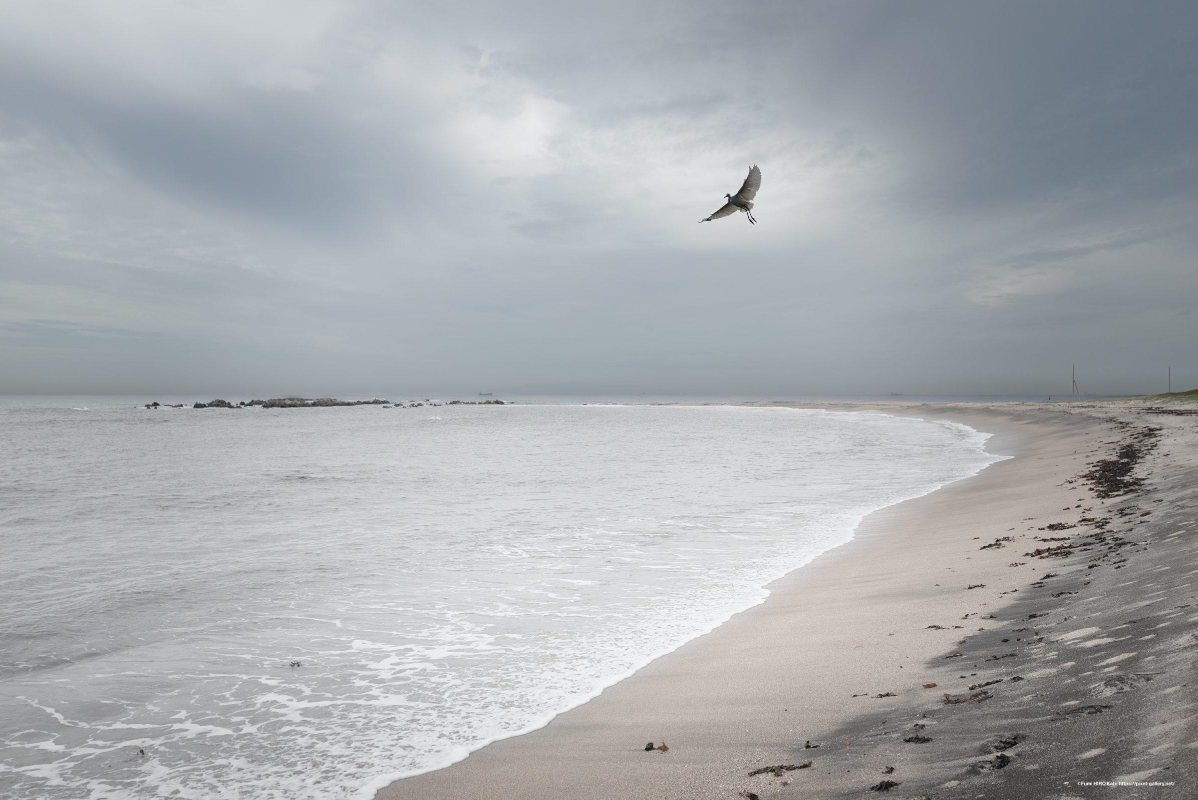 海景 20-020 朝に飛ぶ