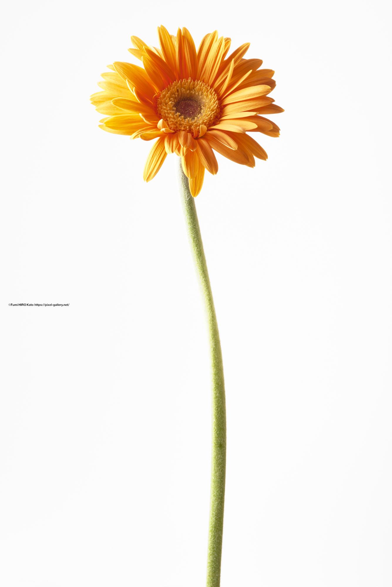 2021 Flower
