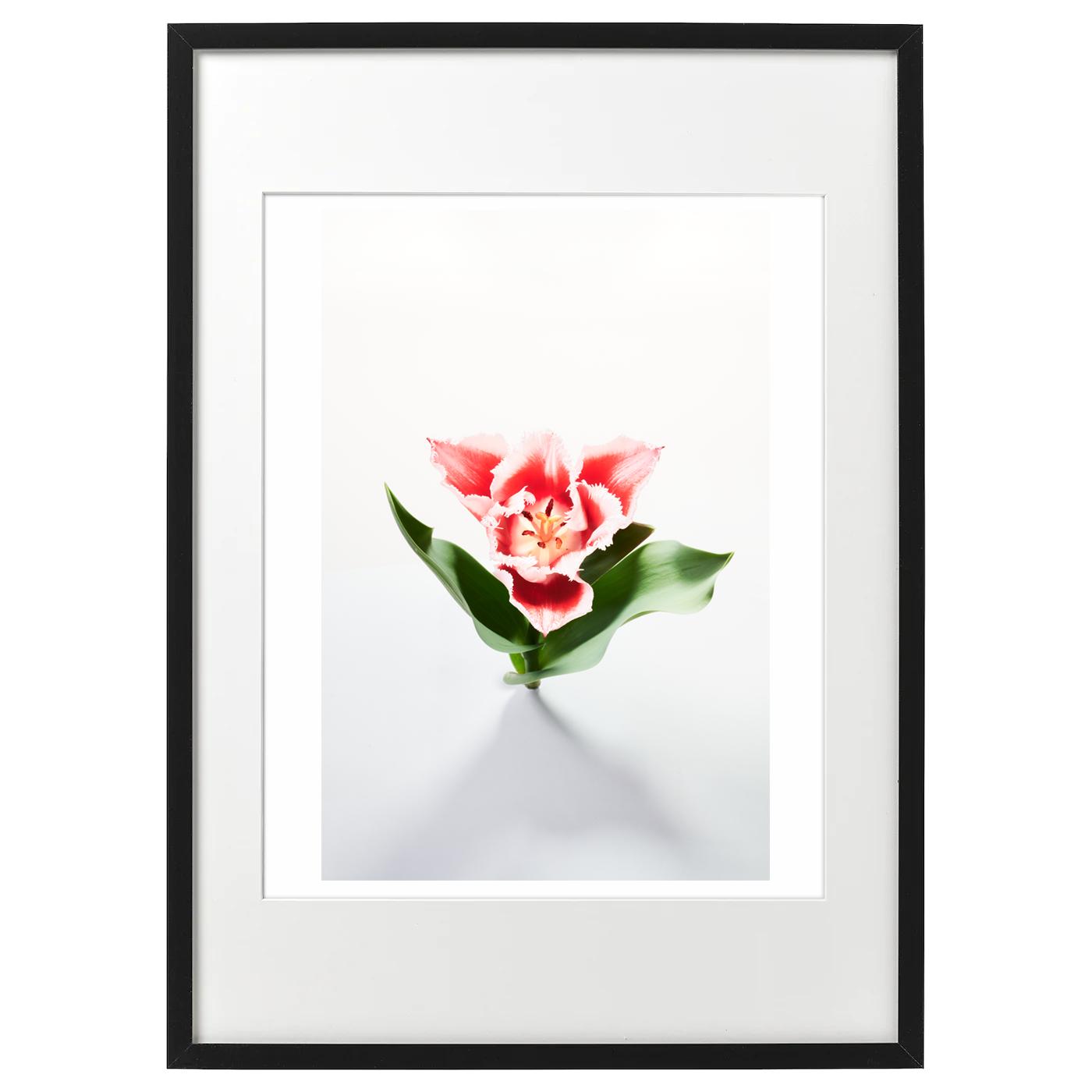 額装ハナ 2021-017 Tulip