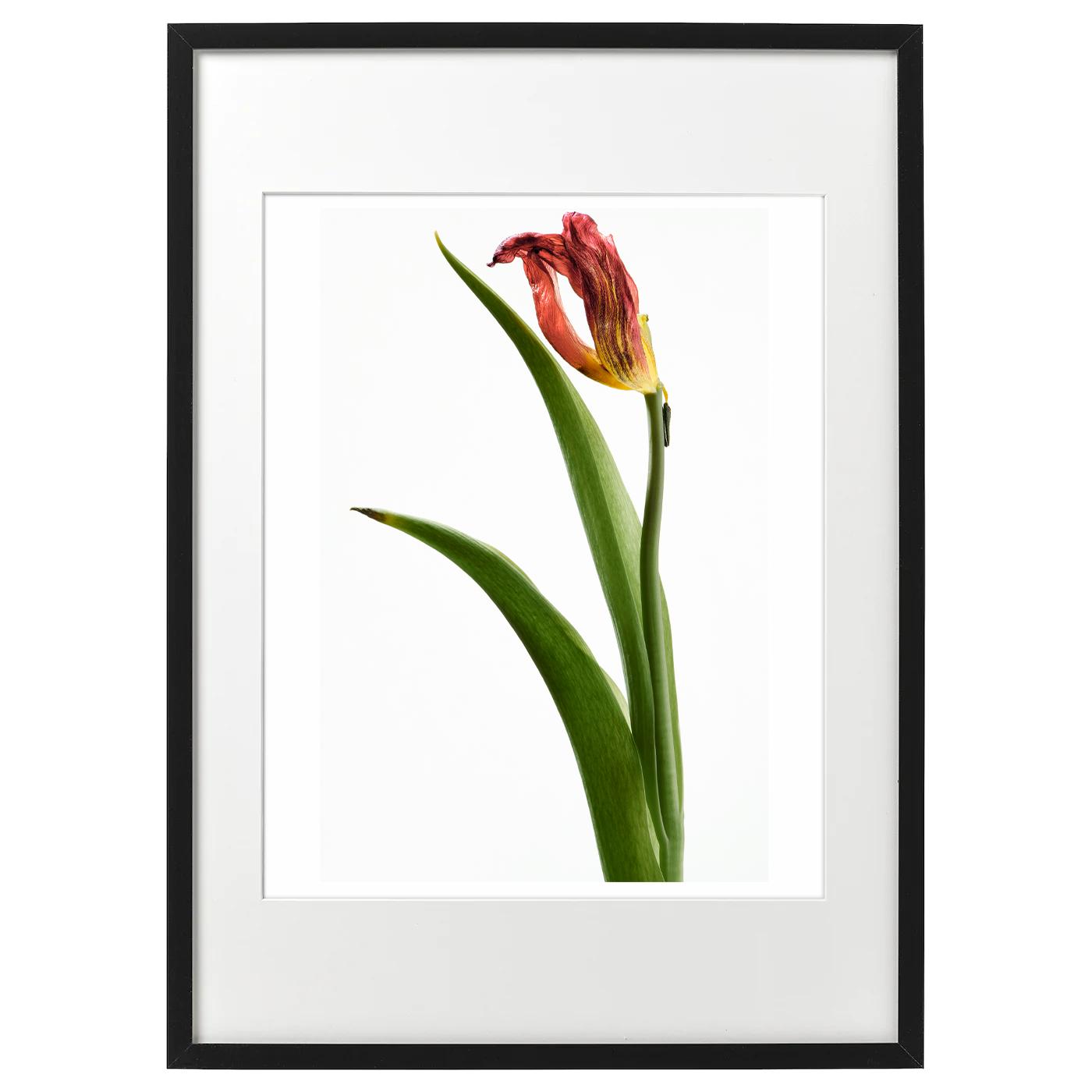 額装ハナ 2021-018 Tulip