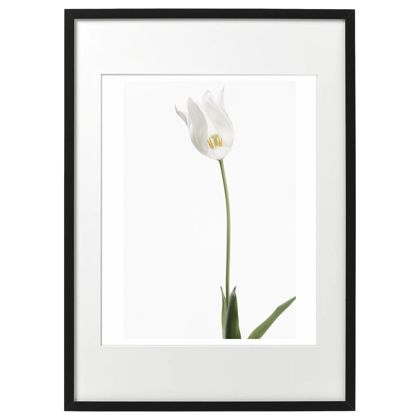 額装 ハナ 2021-021 Tulip