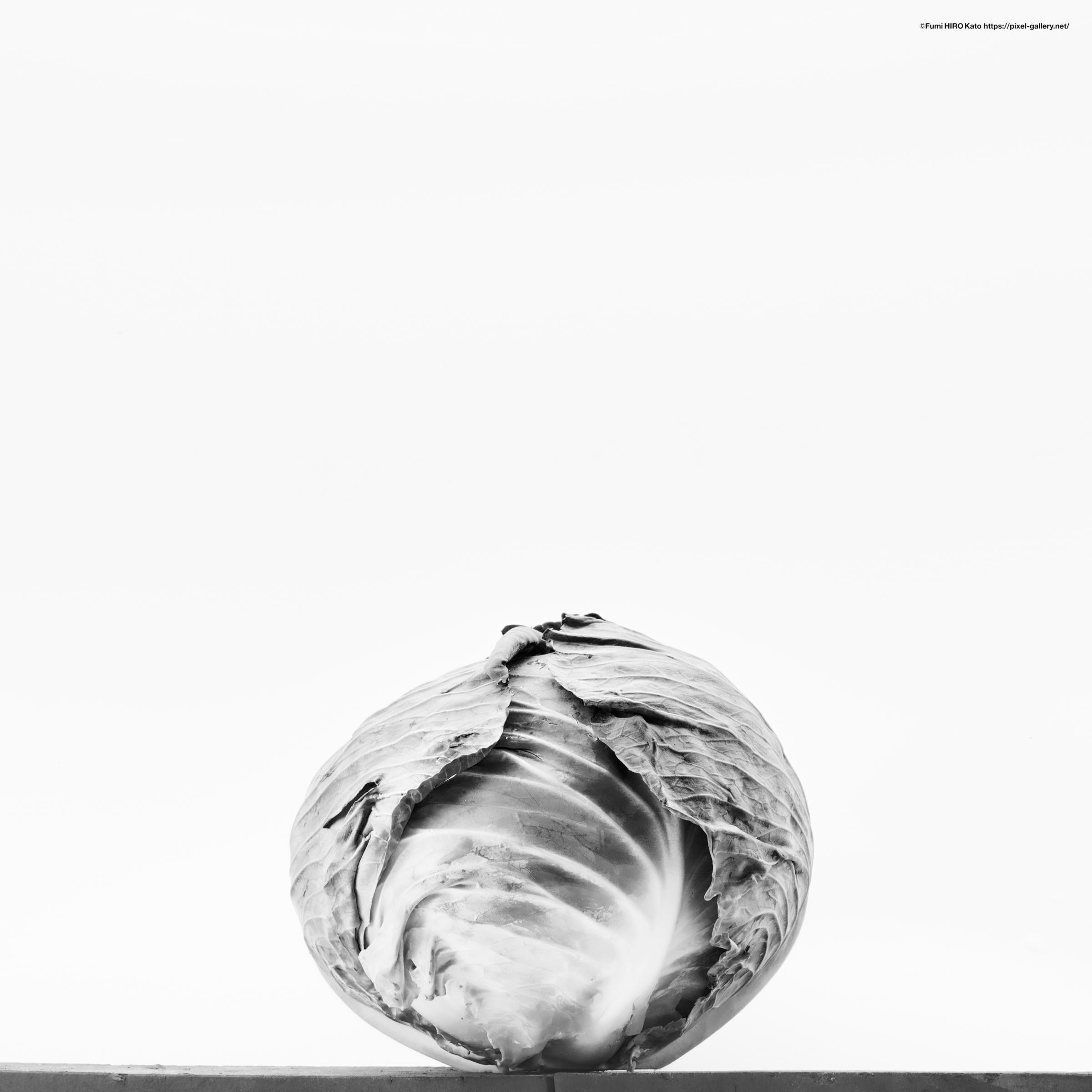 重力 野菜 cabbage